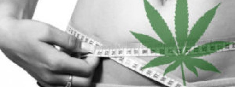 Cannabis In Fighting Obesity