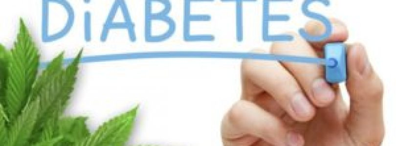 Cannabis Curing Diabetes