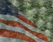 Marijuana In Montana